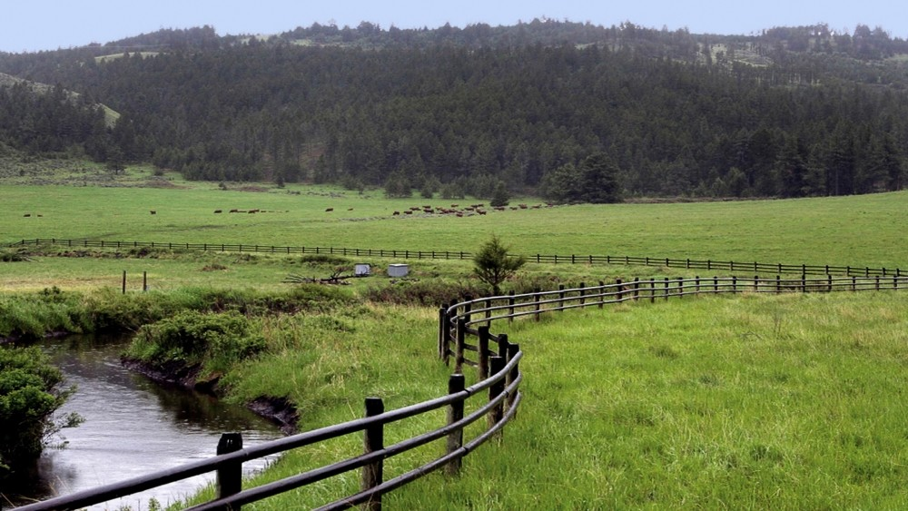 A Pasture and Stream at Meyer Company Ranch